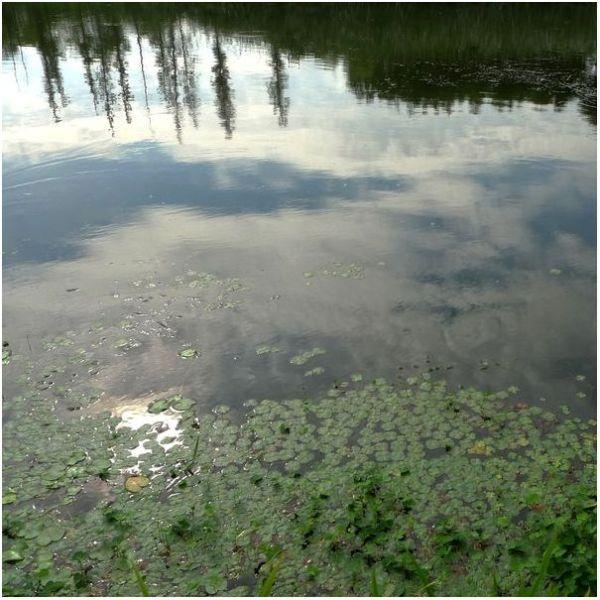 Around the Lotus Pond #5