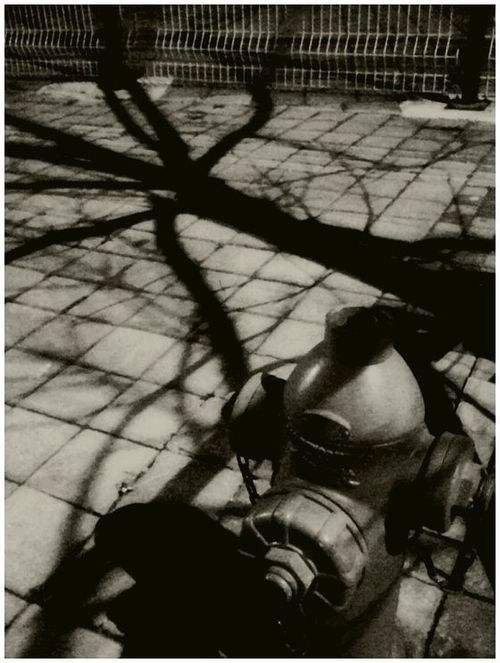 Fire Hydrant and Shadows