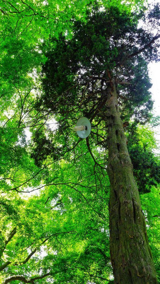 Summer Trees 3