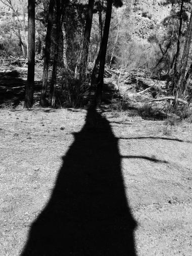 trail in NM