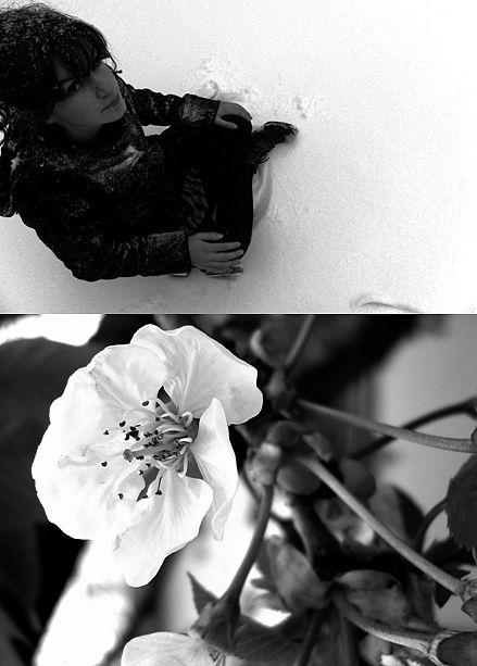 La fleur d'Hiver.