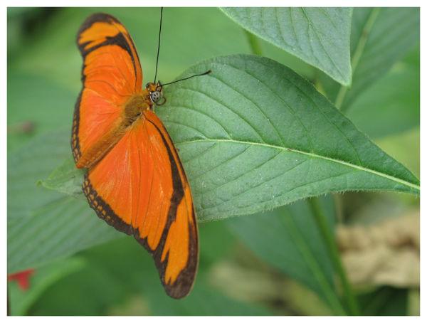 Orange ou verte ?