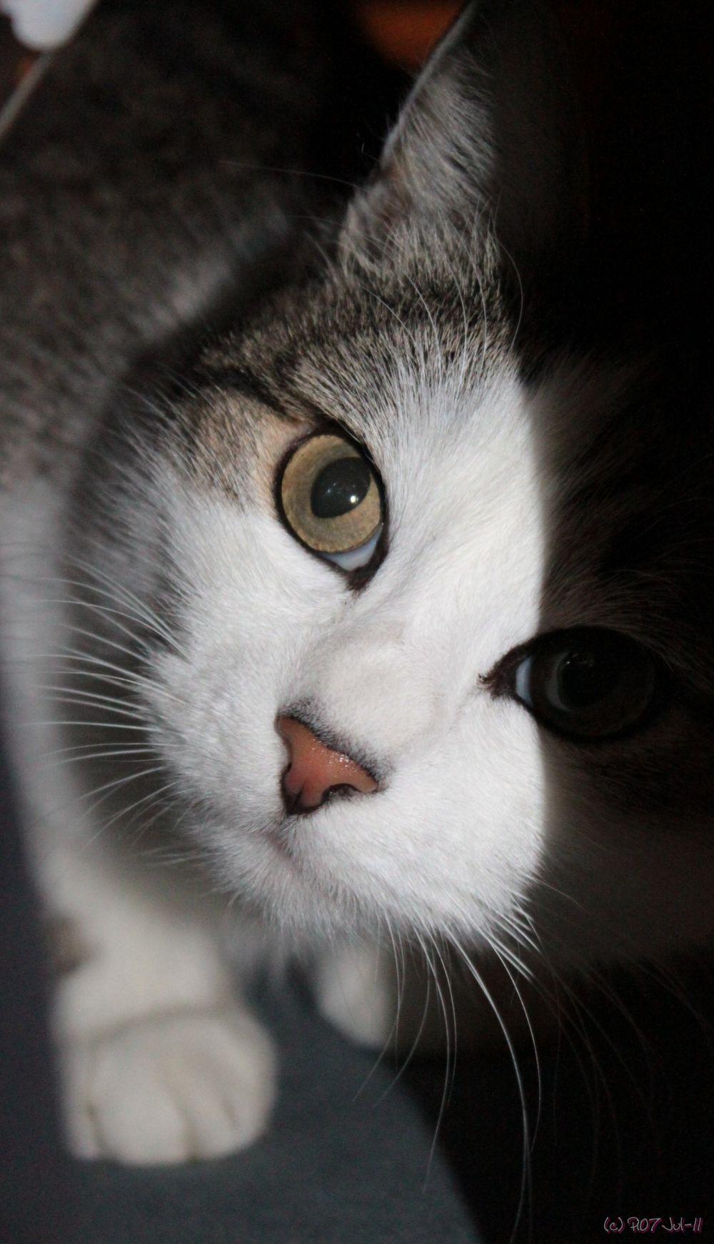 regard d'un chat