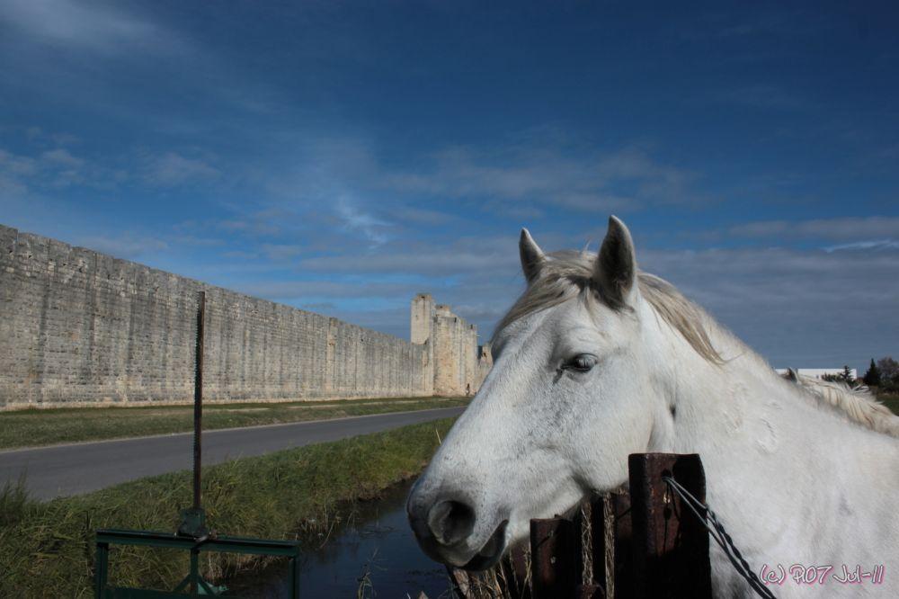 cheval camarguais