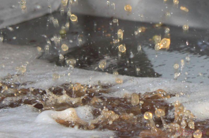 moût de Muscadet pissant du pressoir