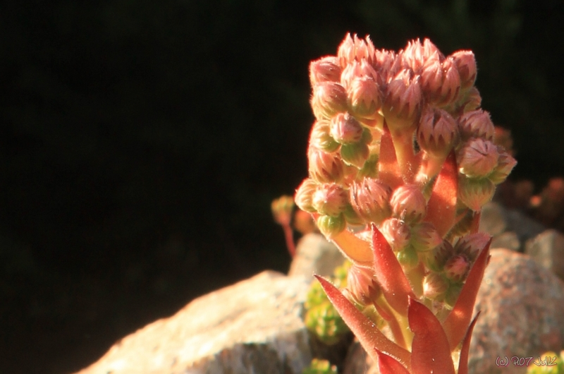 Gros-plan de fleur