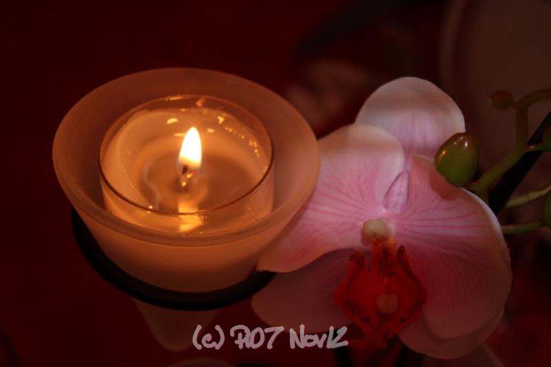 orchidée à la lueur d'une bougie
