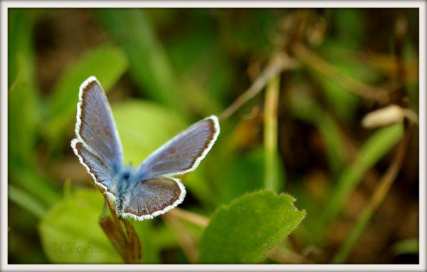 ...bleu azur...
