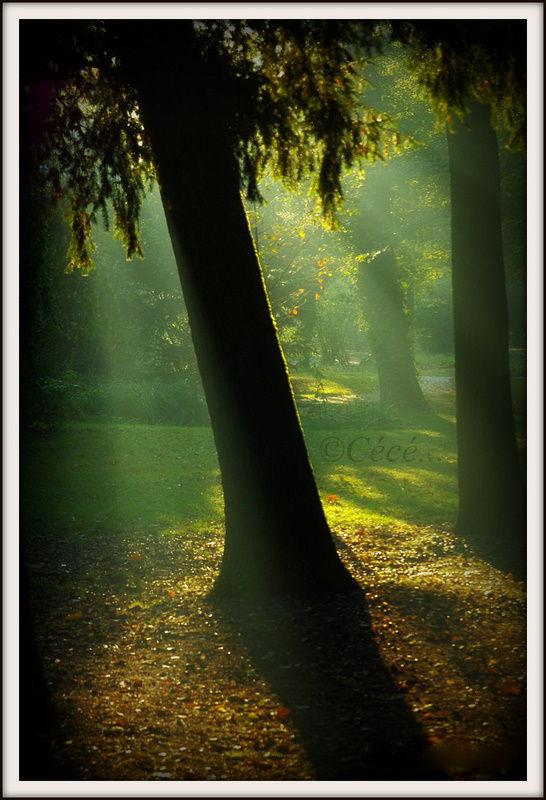 ...rayons matinaux...