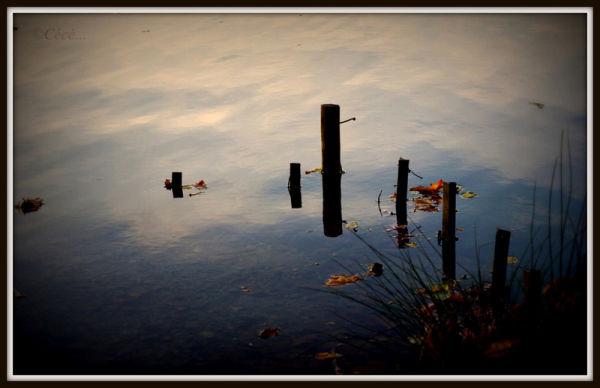 ...reflets...