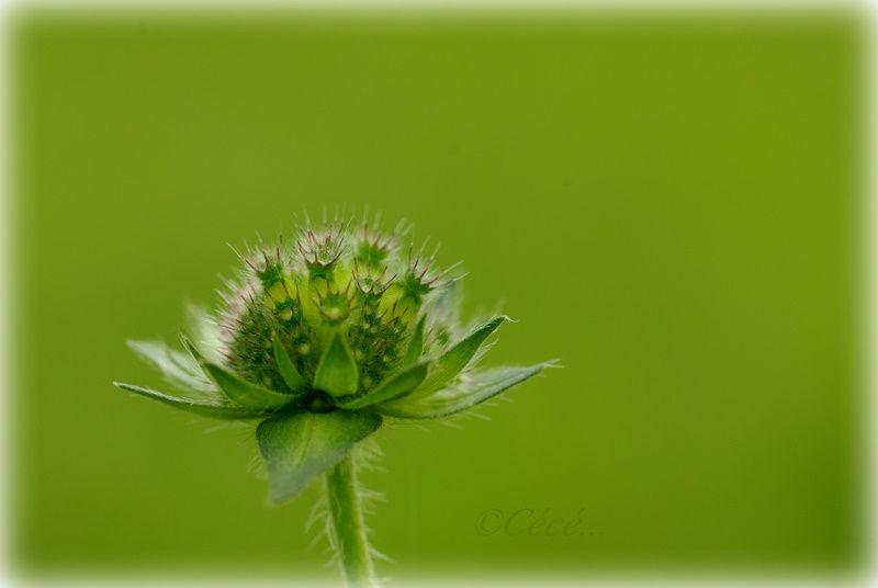 ...vert couleur de l'espoir...