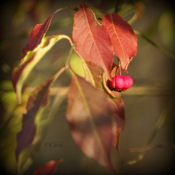 ...une belle lueur d'automne...