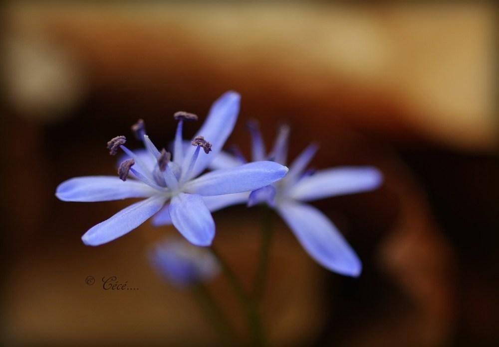 ....il arrive le printemps!! :-)