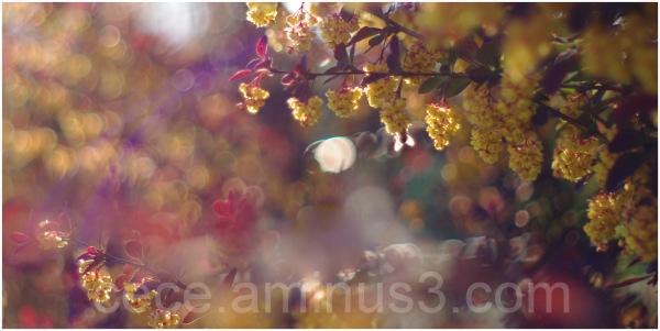 Le printemps aux couleurs automnales...