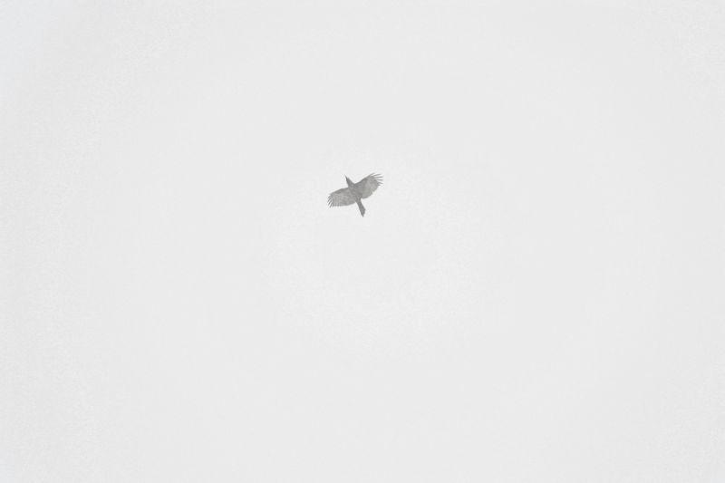 Lone crow.