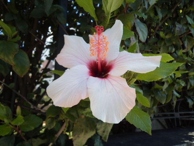 Flowers in lisbon