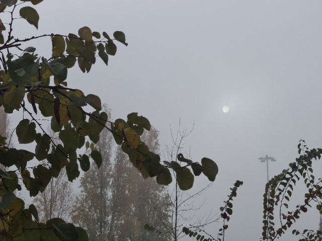 Sun behind the fog