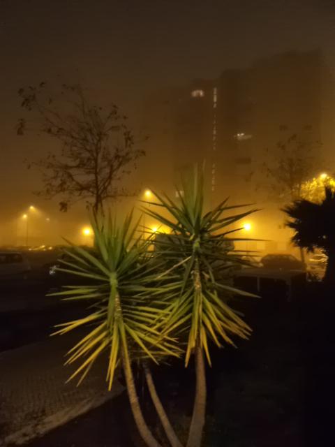 A lovely night in fog