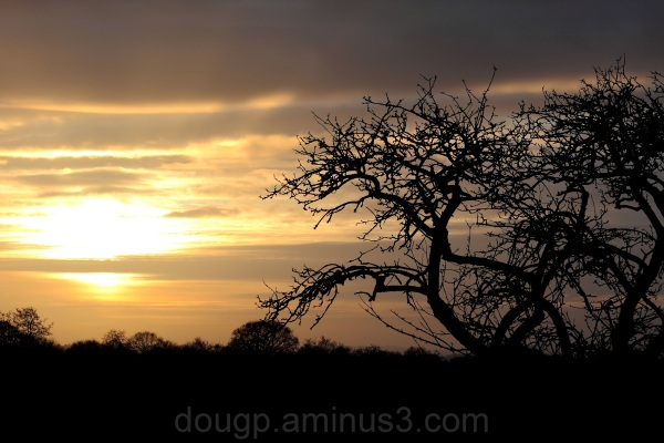 Sunset on Sedgemoor