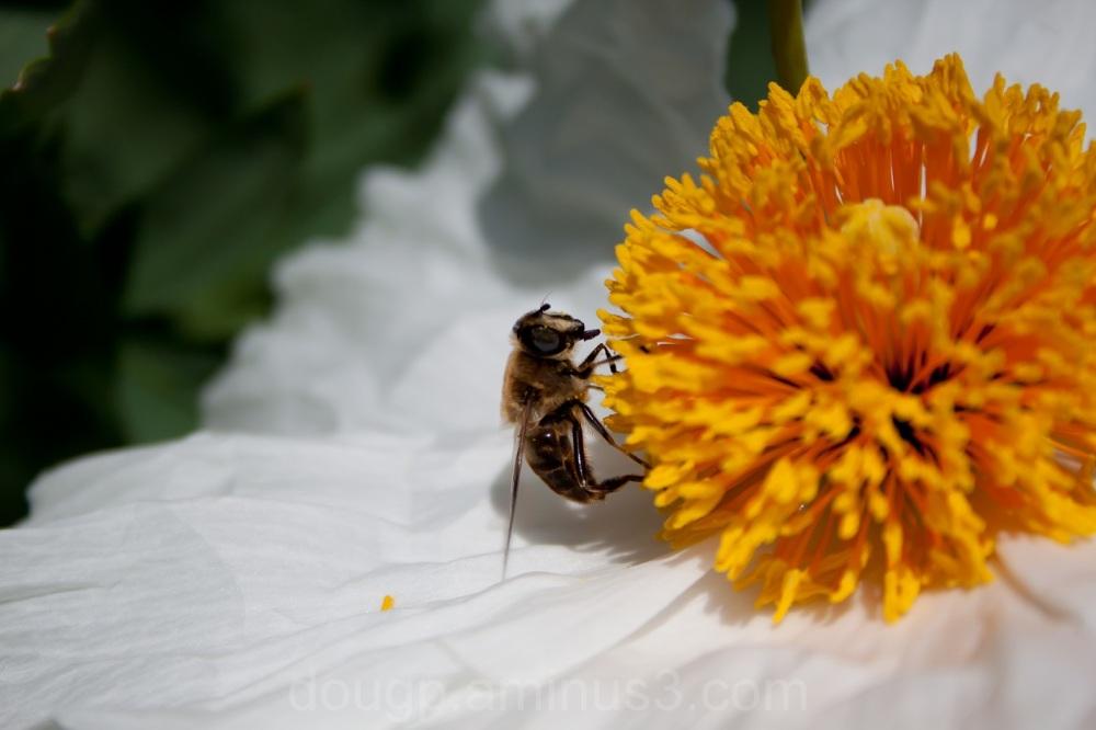 Bee n working