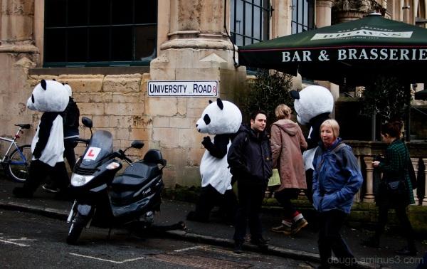 Panda Parade