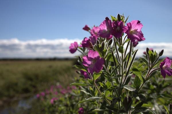 Somerset Hedgerow