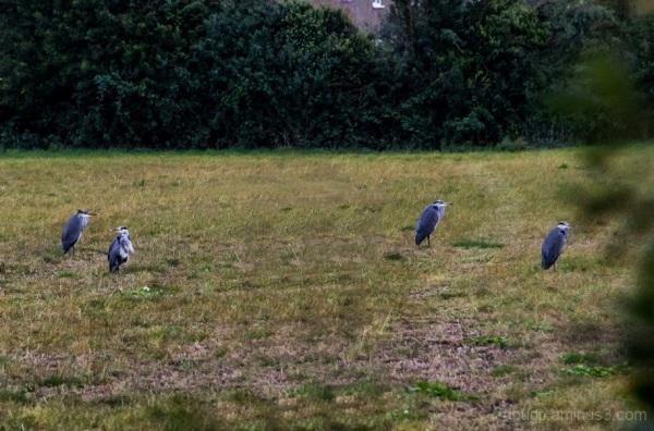 Four in a field
