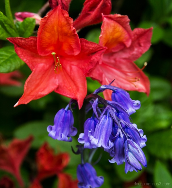 Natures wonderful colour
