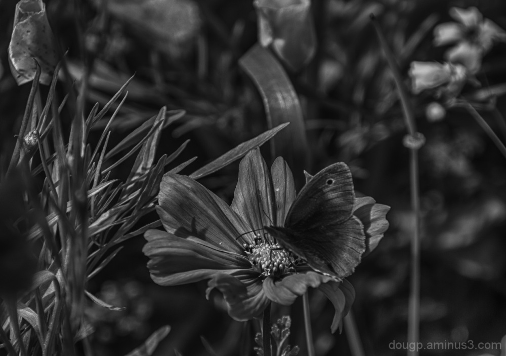 Nature in monochrome