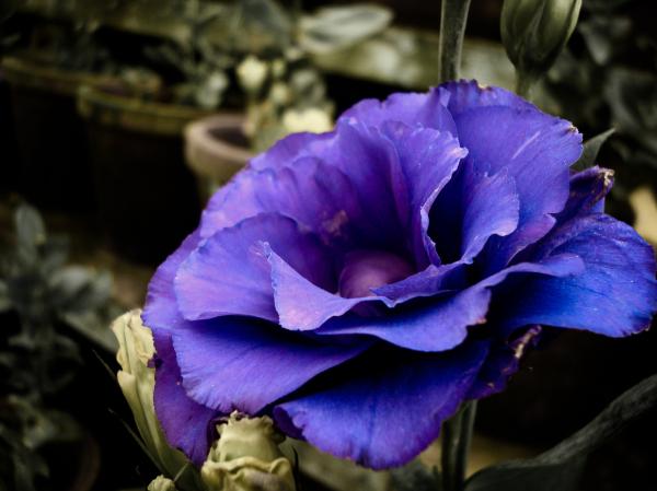 Random Flower in Munnar