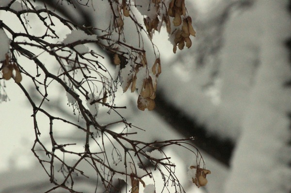 A branch of a tree during snowfall