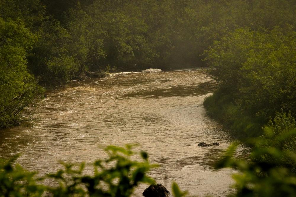 Gooseberry River in State Park