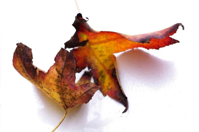 autumn kiss