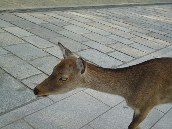 doe a deer, my favourite deer