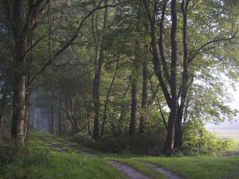 bit fog