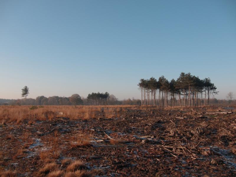 big heath