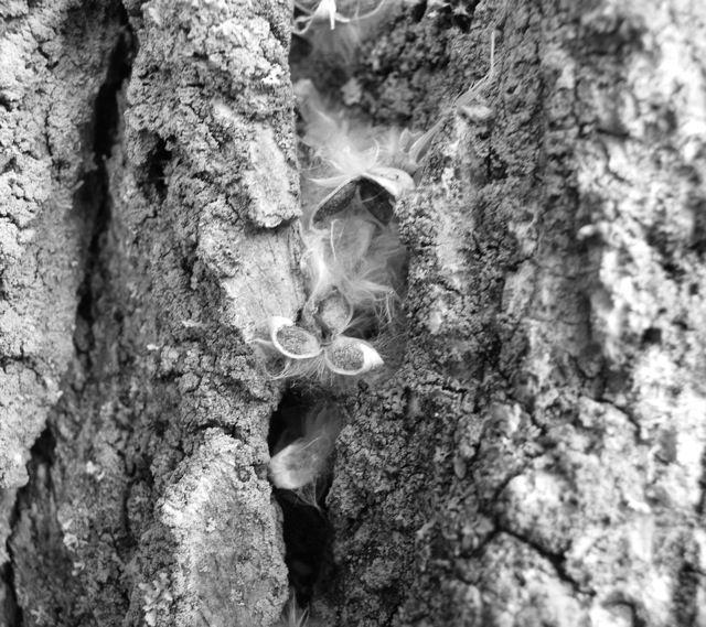 Tree Fuzz