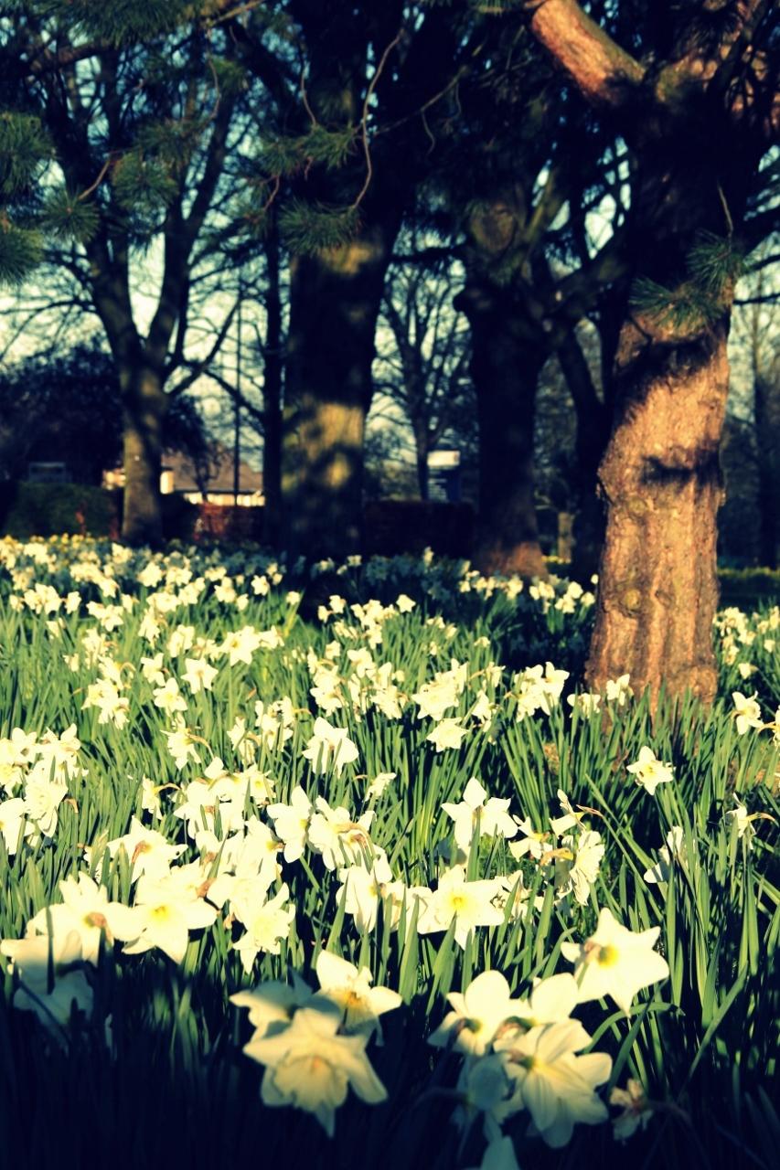 Uni of Edinburgh Kings Buildings Campus Flowers