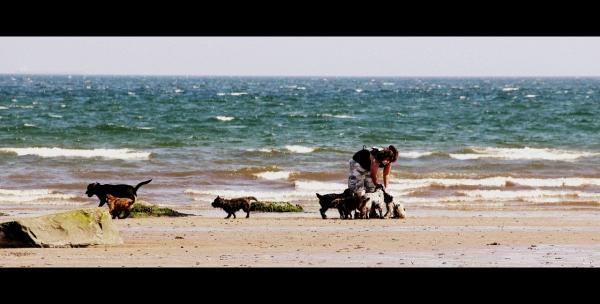 Dog Walker on Portobello Beach Edinburgh