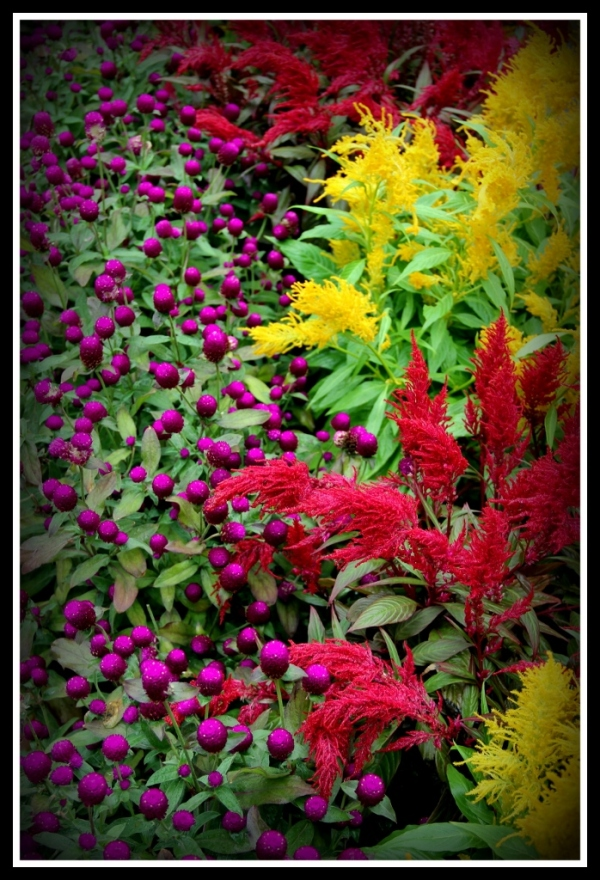 Flowers at the Monastery,  Lantau Island Hong Kong