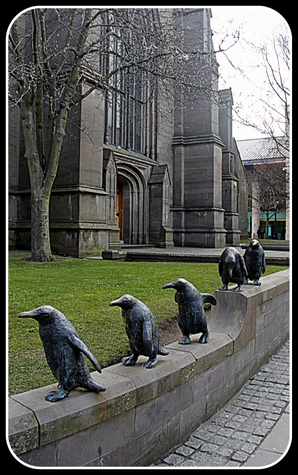 March of the Penguins, Dundee Scotland