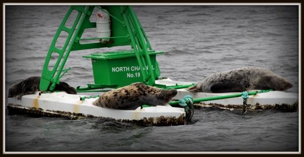 Seals in Edinburgh, Scotland