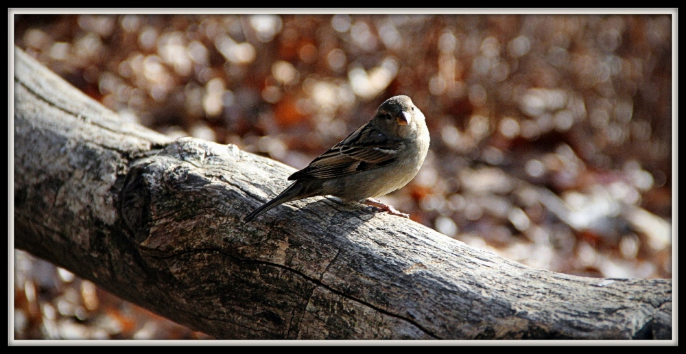 Central Park Bird, New York