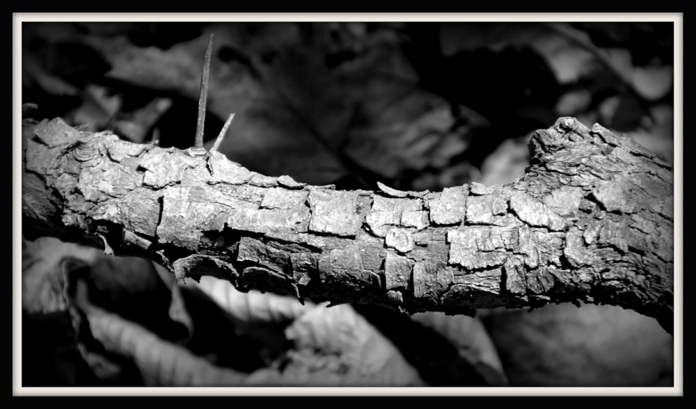 Textures of Trees