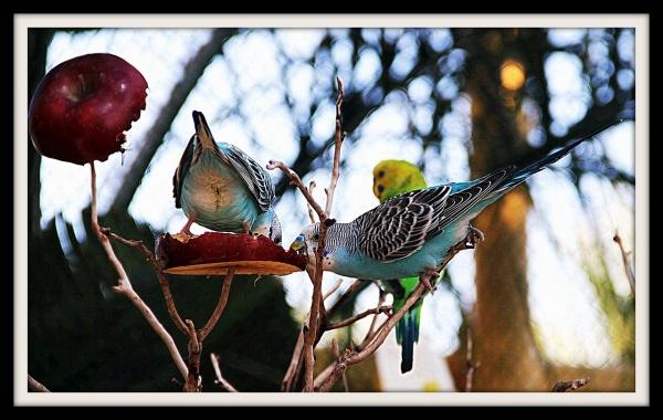 Parakeets New Orleans Aquarium