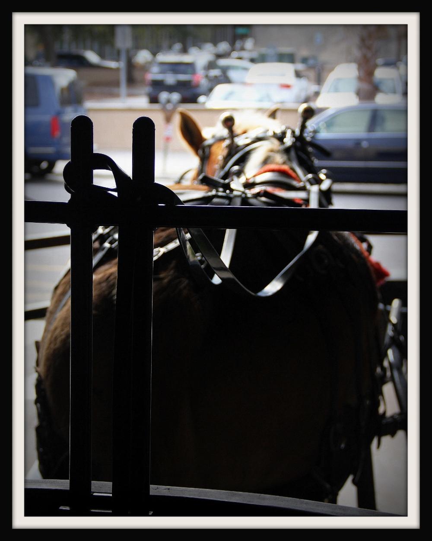 Carriage Ride, Charleston South Carolina