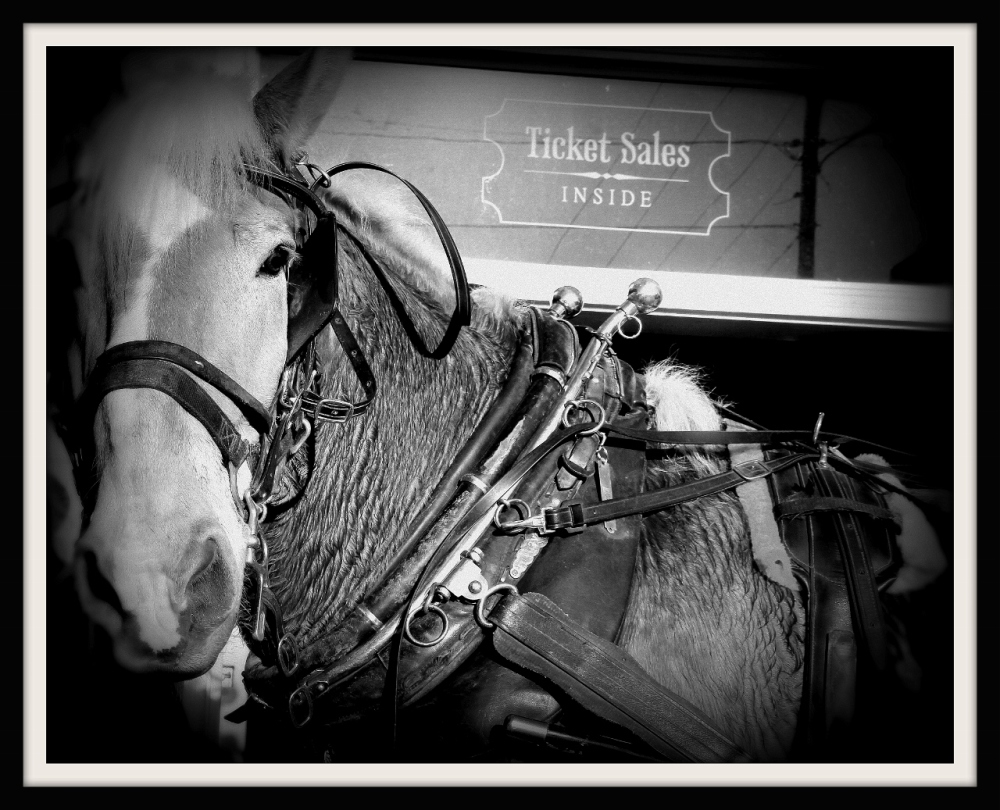 Carriage Ride, Charleston SC
