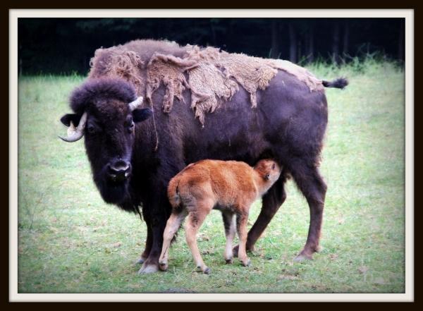 Born in Buffalo?