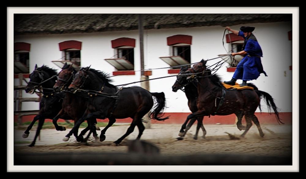 Horse Farm, Hungary