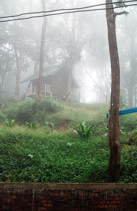 lonesome hut in the misty jungle